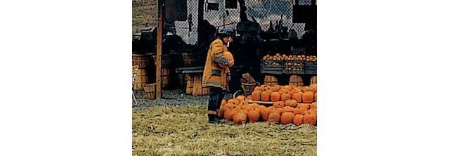 Fireman holding a pumpkin while looking at rows of pumkins