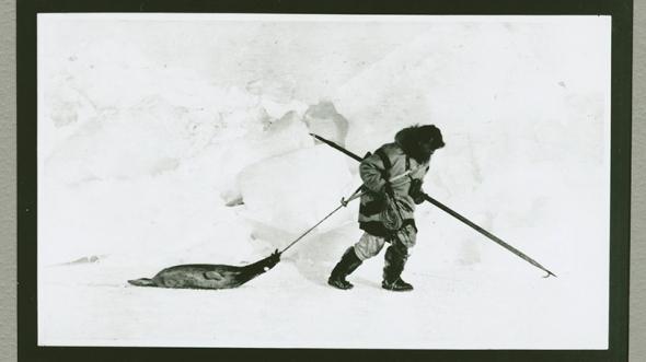 Vilhjalmur Stefansson Arctic hunt